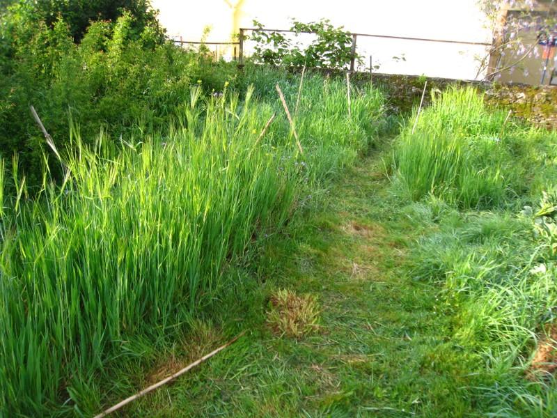 Parcelles d'engrais verts en avril